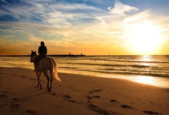"""img src=""""plage.jpg"""" alt=""""fiordilezza baignade cheval corse cupabia serradiferro corsica horse cavallu"""""""