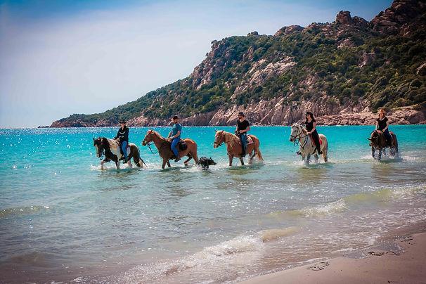 """img src=""""baignade.jpg"""" alt=""""fiordilezza baignade cheval corse cupabia serradiferro corsica horse cavallu"""""""