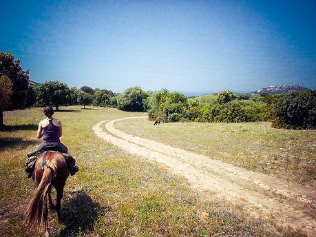 Fior di Lezza cheval corse rando sartène cupabia poney equitation