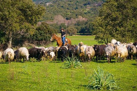 "img src=""fermiere.jpg"" alt=""balade rando plage maquis corse cheval galop cavallu horse corsica"""