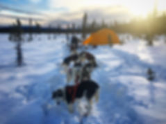 Fairbanks Dog Sledding Tour