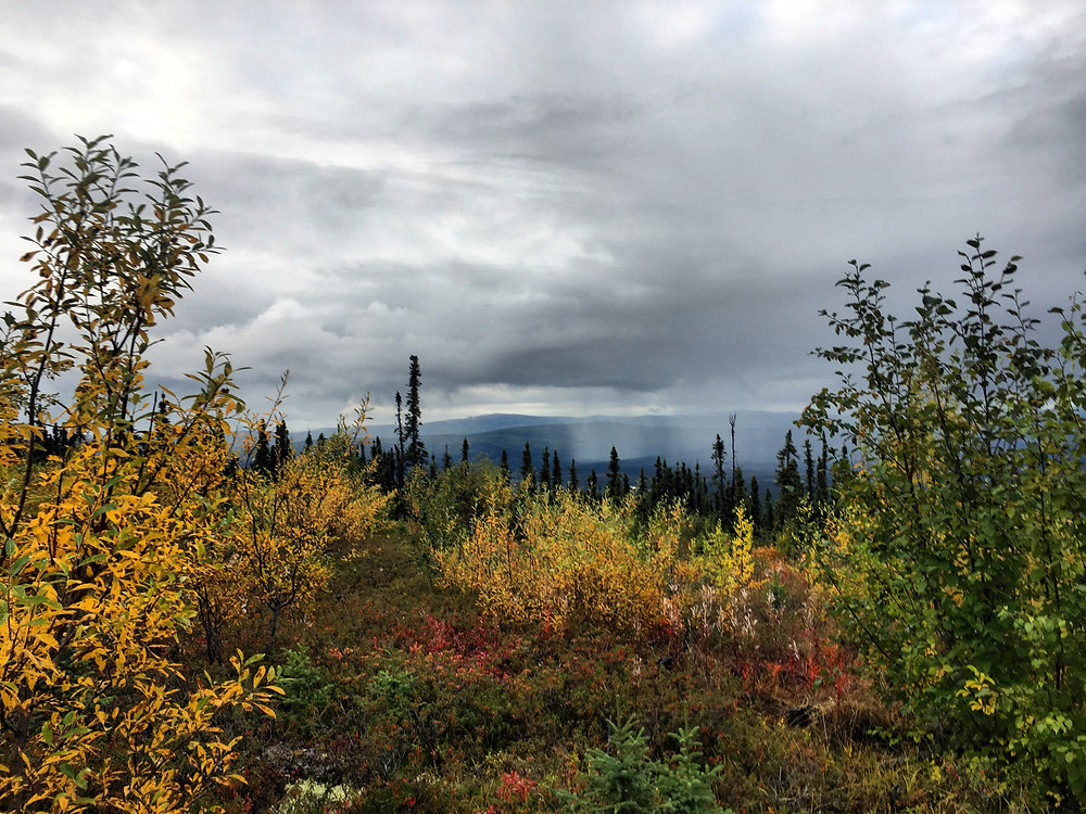 Fairbanks Alaska Husky Hike