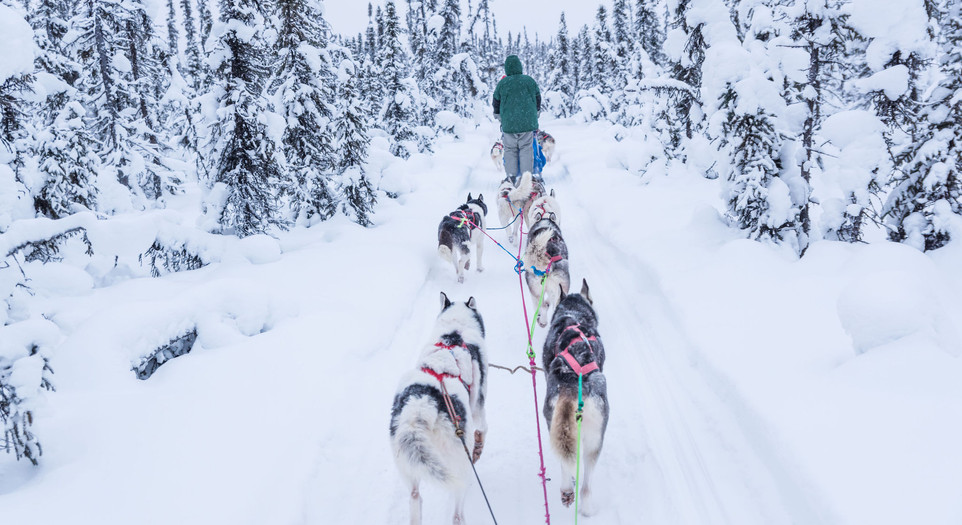 Mushing throuhg snow capped black spruce
