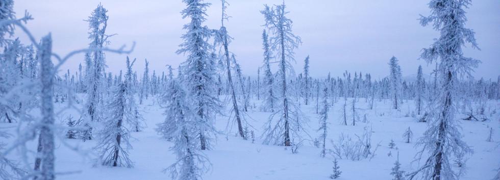 Beautiful frosty landscapes.