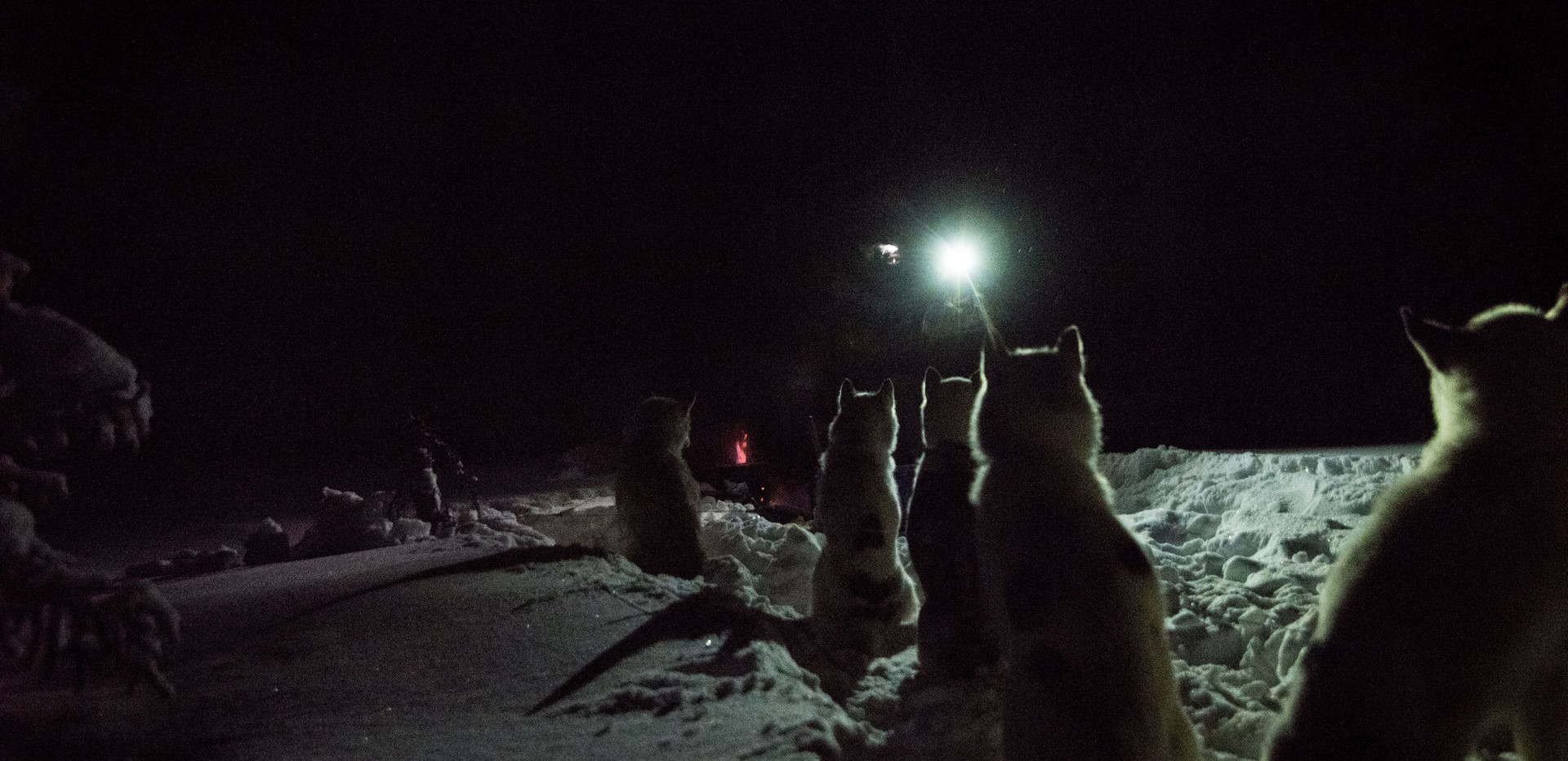 Sled dog supper is about to be served.