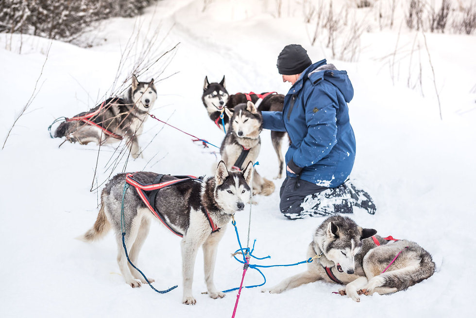 day tour with huskies