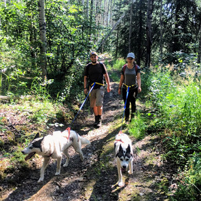 Husky Hiking in the Time of Covid-19