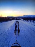 Fairbanks Dog Sledding Tour