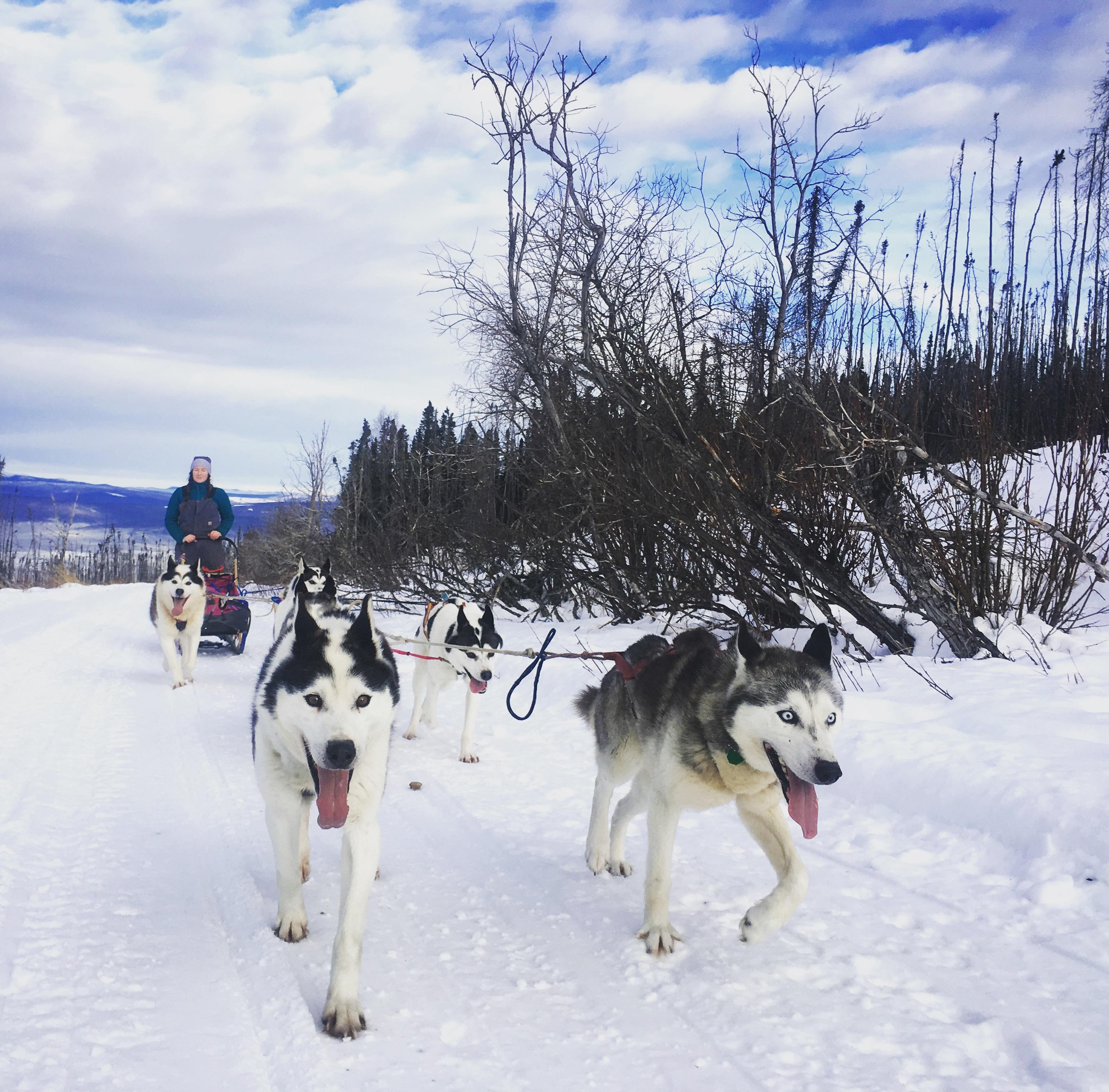 Mushing in Fairbanks