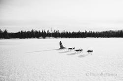 Mushing Tours in Fairbanks