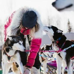 Dogsledding in Fairbanks