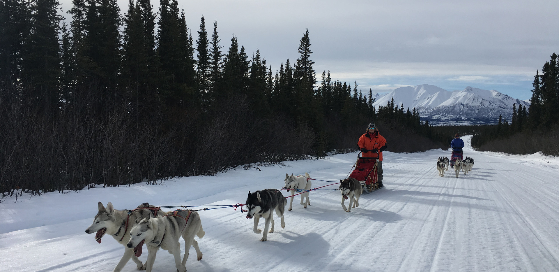 Denali Dream Dog Sledding Expedition 2019