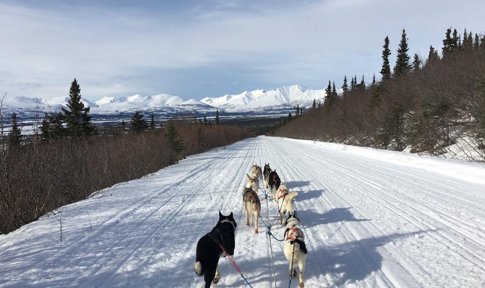 Denali Dream Dog Sledding Expedition 2019