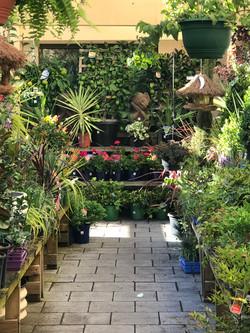 garden centre 9