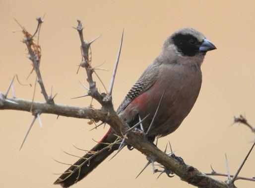 The Top 10 Best Bird Watching Spots in Kenya