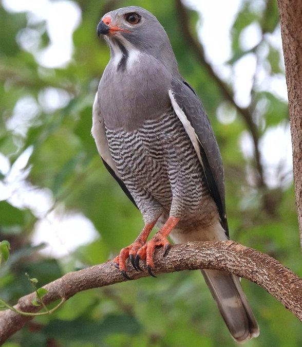 birdwatching tours Kenya