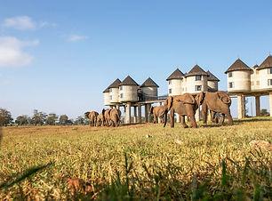 Sarova Salt Lick Game Lodge - Elephants