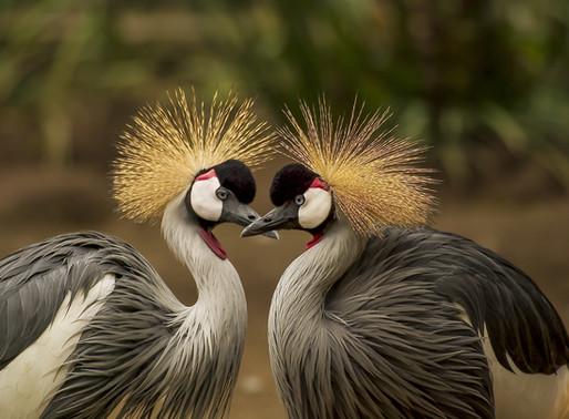 10 beautiful birds to see in Kenya