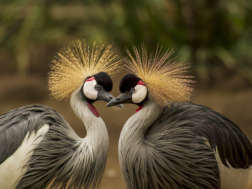 10 beautiful birds to see in Kenya