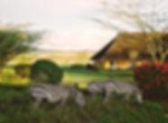 Keekorok-Lodge.jpg