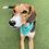 Thumbnail: Turquoise Seahorse Dog Bandana