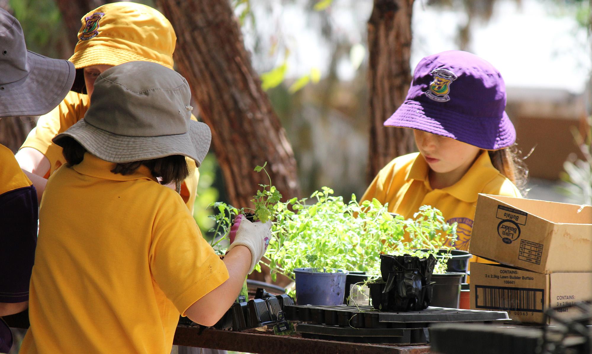 glen-forrest-primary-gardening