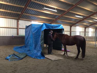 nagebouwde trailer angstig paard.jpg