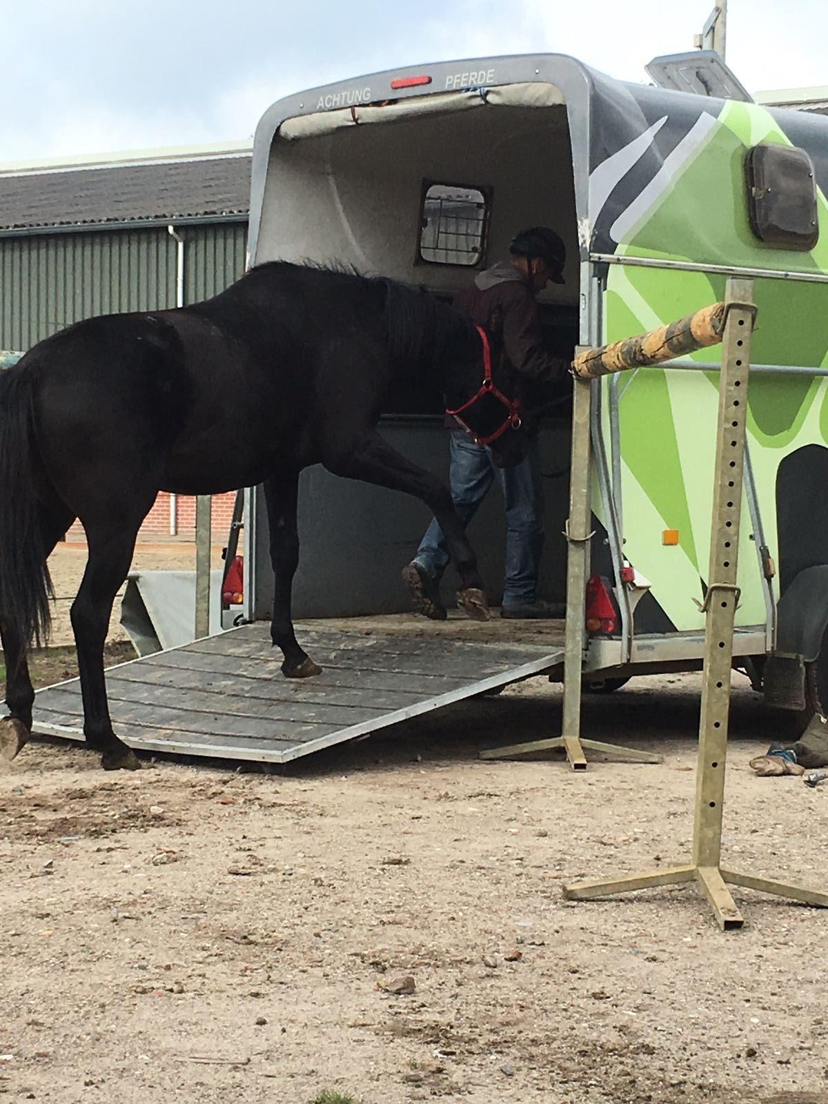 trailer jong paard 2