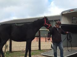 trailer jong paard 1
