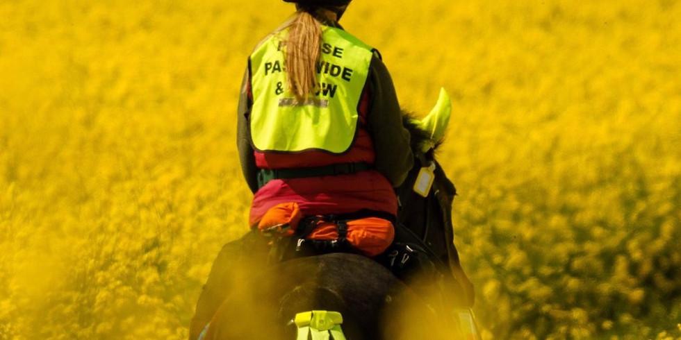 Horsemanship for Groundwork with Sally Brett Webinar