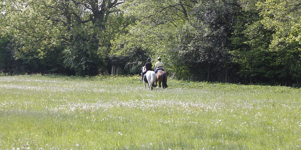 Horsemanship For Hacking Camp 2020 (Shropshire)-Sold Out