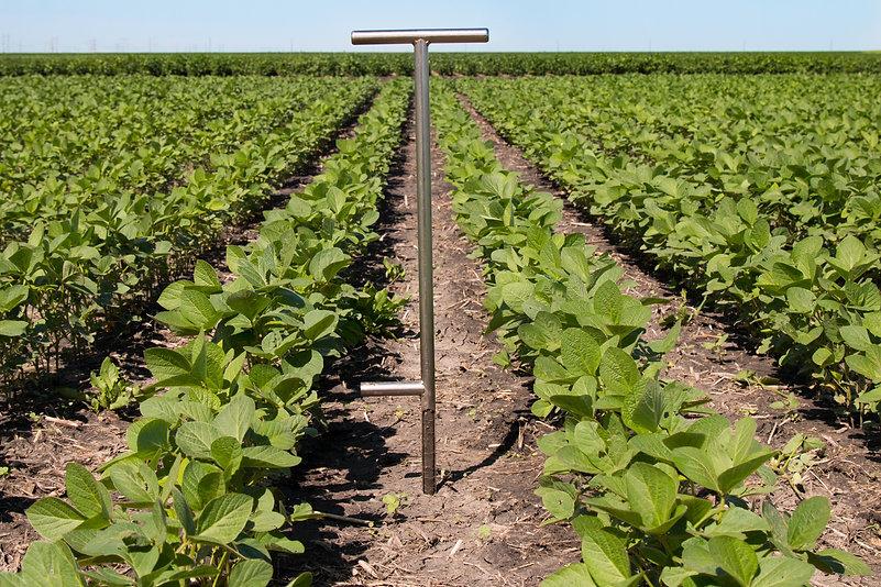 Soil Sampling in Soybeans.jpg