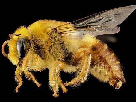 USA Bee Removal
