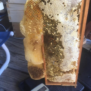 USA Bee Removal Raw Honey www.beeremoval