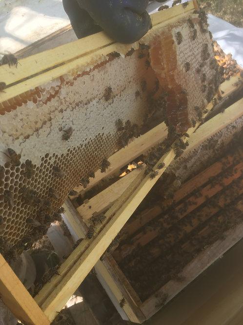 Local Raw Honey in Austin, TX
