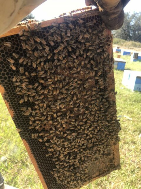 5 frame Bee Nuc available in Austin Texas