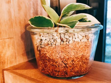 町田 美容室 『頂いた植物。大切に育ててます。』