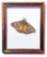 Custom moth map art piece us and we art.