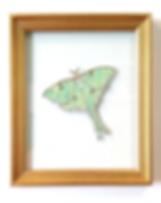 custom luna moth us and we art map.png