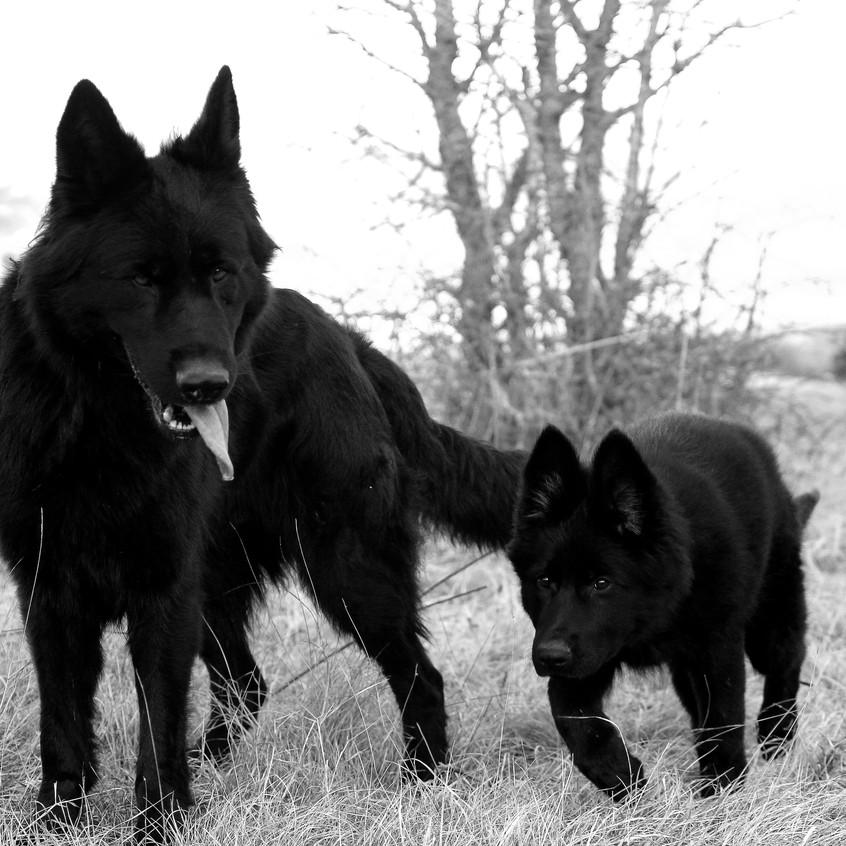 Mamba et Freyja