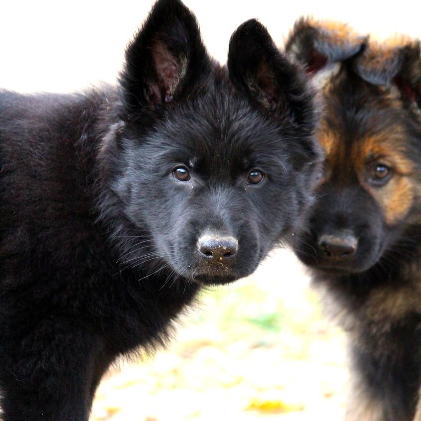 Freyja et Twilight