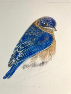 Blue Bird - Watercolor