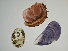 Misc - Watercolor