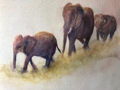 Elephant Family - Watercolor