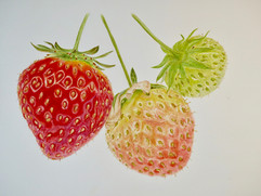 Strawberries - Watercolor