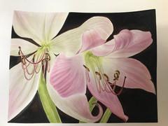Lilies - Watercolor