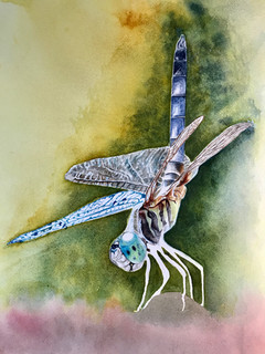 Draganfly - watercolor