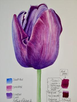 Tulip - Watercolour