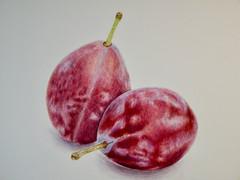 Plums - Watercolor