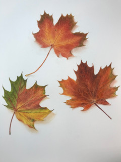 Autumn Leaves - Watercolor